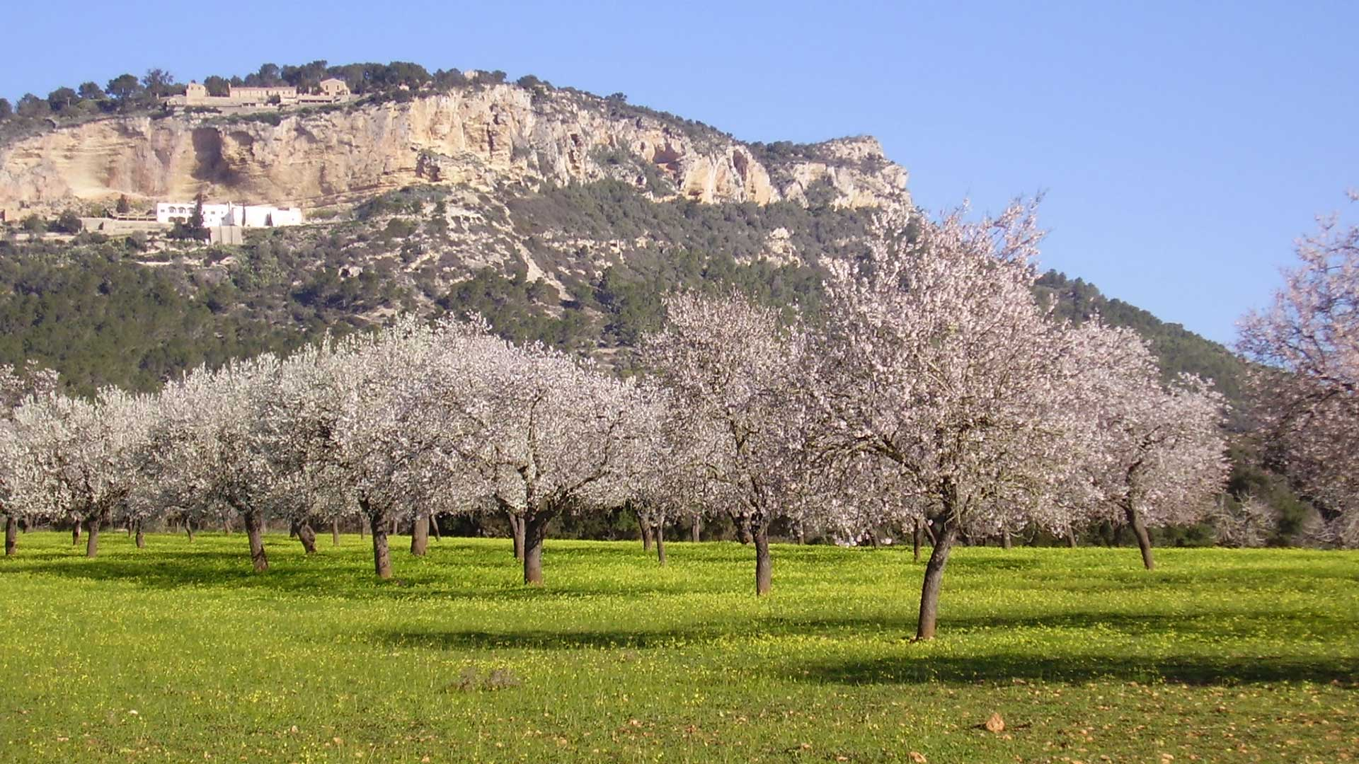 Imagen  Vive una experiencia única a través de la Ruta Santuarios de Mallorca